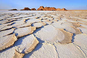 Lake Karoum, overlapping hexagonal plates of salt softened after the rains, Danakil depression, Ethiopia, February 2009  -  Loic Poidevin