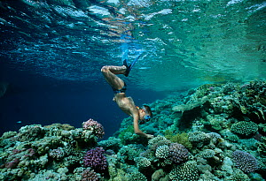 Child snorkeling and exploring on coral reef wall. Red Sea, Egypt. Model released Model released.  -  Jeff Rotman