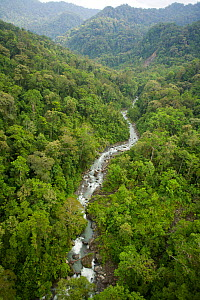 Aerial view of Foja Mountians rain forest, with river flowing through a wooded valley. June 2007.  -  Tim Laman