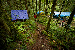 View of the main camp site known as 'Bog Camp' in the Foja Mountains - base of operations for the CI RAP expedition in 2008. Foja Mountains, Papua, Indonesia, 2008. (taken during Conservation Internat...  -  Tim Laman