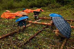 Expedition members waiting under umbrellas at the helipad. Foja Mountains, Papua, Indonesia, 2008. (taken during Conservation International Rapid Assessment Program expedition)  -  Tim Laman
