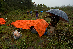 Rain at the helipad while team members wait under umbrellas for the helicopter. Foja Mountains, Papua, Indonesia, 2008. (taken during Conservation International Rapid Assessment Program expedition)  -  Tim Laman