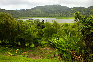 View of Grand Etang Lake near Mount Qua Qua in the central mountain area of Grenada, West-Indies, Caribbean, May 2009. - Michele Westmorland