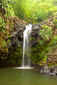 Annandale Falls within national park. Grenada, West-Indies, Caribbean, May 2009. - Michele Westmorland