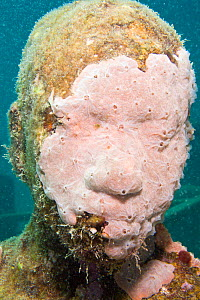 Underwater Sculpture Gallery off Molinere Point, created by Jason de Caires Taylor. Colonised by sea life, Grenada, West-Indies, Caribbean, May 2009. No release. - Michele Westmorland