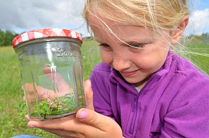 Child in garden collecting insects in jam jar. France, Europe, August. Model released.  -  Dan Burton