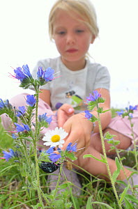 Child in garden observing an insect. France, Europe, August. Model released.  -  Dan Burton