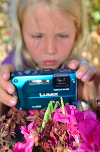 Child photographing Praying Mantis (Mantodea) on flowers. France, Europe, August. Model released.  -  Dan Burton