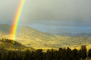 Rainbow after thunderstorm in Yellowstone National Park, Wyoming, USA, May 2009.  -  George Sanker