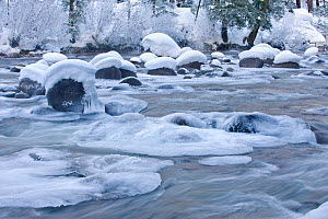 River flowing through snowy rapids in 'Icicle Creek'. Wenatchee reserve, Washington, USA, January.  -  Rob Tilley