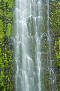 Waimoku Falls Drops (over 400 feet) in the Kipahlu Valley. Maui, Hawaii, February 2011.  -  Rob Tilley
