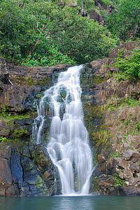 Waimea Valley, Waimea Falls. Oahu, Hawaii, February 2011.  -  Rob Tilley