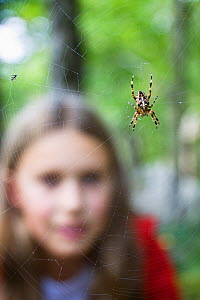 Girl looking at Garden Spider (Araneus diadematus) on web. Upper Bavaria, Germany, Europe, September. Model released. - Konrad Wothe