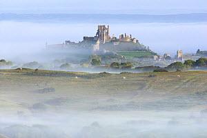 Corfe Castle rising out of mist, viewed from Kingstone, Purbeck, Dorset, UK, September 2010 - Peter Lewis