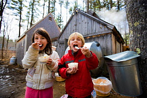 Two children enjoying maple sundaes at Folsom's Sugar House in Chester, New Hampshire, USA. Steam from boiling sap rises from the sugar house. Model released, March 2009  -  Jerry Monkman