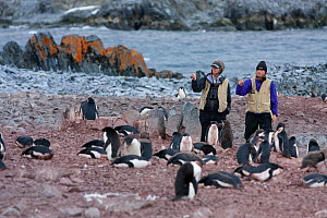 US scientists surveying Adelie penguin colony, Fish Island, Antarctica, February 2009, Taken on location for BBC Frozen Planet series  -  Kathryn Jeffs