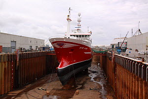 "Norwegian fishing vessel ""Gollenes"" in drydock, Skagen, Denmark, September 2011.  -  Philip Stephen"