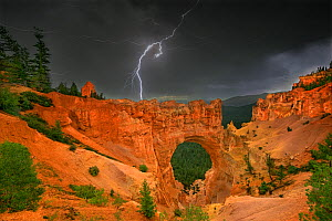 Lightning from a summer monsoon thunderstorm flashes over natural rock bridge, Bryce Canyon NP, Utah, USA, August 2010.NOT AVAILABLE FOR  CARDS OR CALENDARS.  -  David Welling