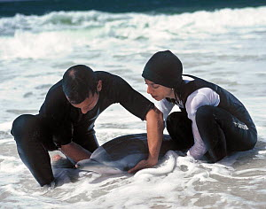 Two people helping a stranded Striped dolphin (Stenella coeruleoalba) in the surf, Troia, Sado Estuary, Portugal  -  Pedro Narra