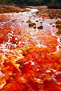 Red waters of the Rio Tinto, coloured by dissolved minerals, primarily iron. Andalusia, Spain, December 2011.  -  Juan Carlos Munoz