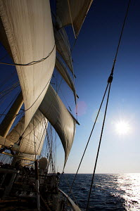Cruise tall ship 'Star Clipper' sailing into the sun, Spain, May 2007. For editorial use only.  -  Sea & See