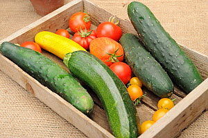Small collection of freshly picked home grown vegetables, Tomatoes (Solanum lycopersicum), Courgettes (Cucurbita pepo) and Cucumber (Cucurbita sativus) Norfolk, UK, August  -  Gary K. Smith