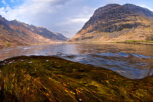Scenic photo of River Coe in the Highlands, Glen Coe, Scotland, UK, April 2011. 2020VISION Book Plate. Did you know? Glen coe is the remains of a supervolcano which erupted 420 million year ago.  -  Alex Mustard / 2020VISION