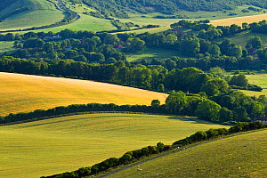 View of downland and arable farmland from Wilmington Hill, Wilmington, South Downs National Park, East Sussex, England, UK, July 2011 - Guy Edwardes / 2020VISION