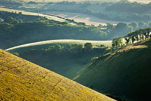 The Devils Dyke, Fulking, South Downs National Park, East Sussex, England, UK, July 2011 - Guy Edwardes / 2020VISION