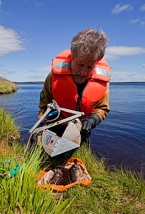 RSPB scientist studying aquatic invertebrate adundance as part of Common Scoter (Melanitta nigra) research, Forsinard Flows RSPB reserve, Flow Country, Sutherland, Highlands, Scotland, UK, June 2011.... - Mark Hamblin / 2020VISION