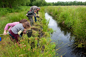 Family pond dipping in rhyne, visiting the Westhay Nature Reserve, Somerset Levels, UK, June 2011, model released  -  Paul Harris / 2020VISION