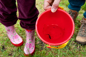 Family pond dipping in rhyne and looking at small fish caught in bucket, visiting the Westhay Nature Reserve, Somerset Levels, UK, June 2011, model released  -  Paul Harris / 2020VISION