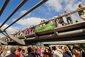 People on the Millenium Bridge at the RSPB 'Date With Nature Event' for learning about urban Peregrine falcon, Tate Modern, South Bank, London, UK, September 2011, RSPB Greater Thames Futurescapes Pro...  -  Terry Whittaker / 2020VISION