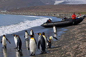 King Penguin (Aptenodytes patagonicus) rookery with people looking on from near boats. South Georgia, Antarctica. - Mark Carwardine