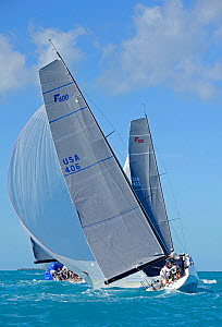 Farr 400 'Spaceman Spiff' downwind during a race on day 5 of Key West Race Week, Florida, USA, January 2012. All non-editorial uses must be cleared individually.  -  Rick Tomlinson