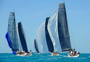 Farr 400 fleet downwind during a race on day 5 of Key West Race Week, Florida, USA, January 2012. All non-editorial uses must be cleared individually.  -  Rick Tomlinson