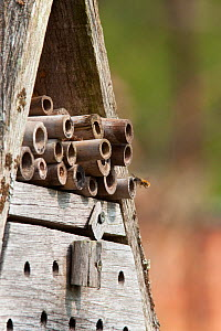 Insect hotel / Artificial nest holes and shelter for insects and invertebrates, in garden, UK, April 2011. - Ann & Steve Toon