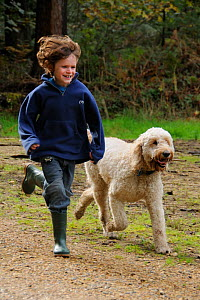 Boy running with pet dog (Canis familiaris) a 'goldendoodle' golden retriever / standard Poodle cross. Hampshire, UK, October. Model released.  -  Nick Upton