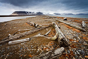 Timber washed onto the shore by the strong arctic currents. There are no trees on Spitzbergen, all the wood comes from the Siberian Coast, Poolepynten,  Spitzbergen, Svalbard, Norway, July 2011 - Christophe Courteau