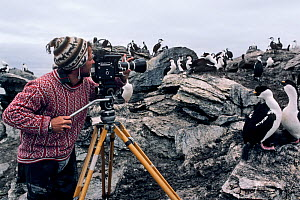 Cameraman Doug Allan filming Shags (Phalacrocorax aristotelis) on his first ever paid shoot. Signy Island, South Orkney Islands, Antarctica, 1984. Freeze frame book plate page 36.  -  Doug Allan