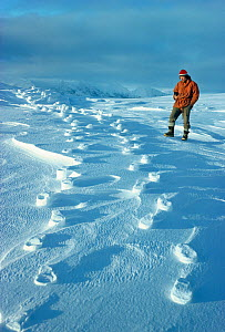 Man standing beside raised footprints in the snow, caused when the wind blows away the lose snow leaving the compacted snow, Signy Island, South Orkney Islands, Antarctica, September, Freeze Frame boo...  -  Doug Allan