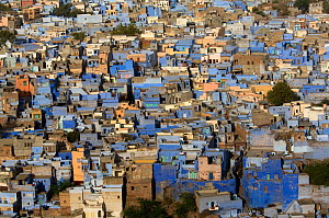 Looking down on the Blue city of Jodhpur, Rajasthan, India, 2010  -  Michael W. Richards