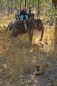 Bengal tiger (Panthera tigris tigris) watched by tourists on Indian elephant (Elephas maximus) as part of 'tiger show', Pench National Park, Madhya Pradesh, Indian 2006  -  Michael W. Richards