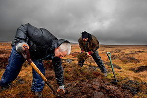 RSPB volunteers carrying out conservation work on moorland, Peak District NP, April 2011  -  Ben Hall / 2020VISION