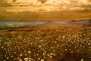 Scenic view of moorland landscape at sunset with cotton grass (Eriophorum sp) flowering in foreground, Peak District NP, June 2011  -  Ben Hall / 2020VISION