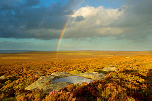 Scenic view of heather moorland with rainbow, Peak District NP, August 2011  -  Ben Hall / 2020VISION