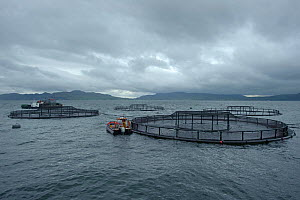 Salmon farm in the Sound of Mull, Inner Hebrides, Scotland, UK, July 2011 - Chris Gomersall / 2020VISION
