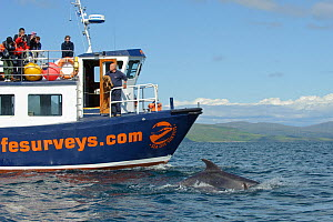 Passengers on observation deck of Sea Life Surveys vessel Sula Beag watching a Bottlenose dolphin (Tursiops truncatus) bow riding in the Sound of Mull, Inner Hebrides, Scotland, UK, July 2011 - Chris Gomersall / 2020VISION