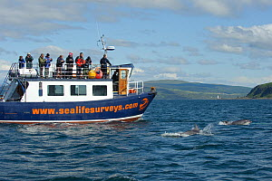 Passengers on observation deck of Sea Life Surveys vessel Sula Beag watching two Bottlenose dolphins (Tursiops truncatus) in the Sound of Mull, Inner Hebrides, Scotland, UK, July 2011 - Chris Gomersall / 2020VISION