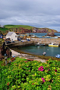 St Abbs harbour (St Abbs and Eyemouth Voluntary Marine Reserve), Berwickshire, Scotland, August 2011  -  Linda Pitkin / 2020VISION